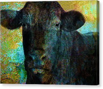 Black Angus Canvas Print by Ann Powell