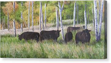 Black Angus Grazing Canvas Print by Tammy  Taylor