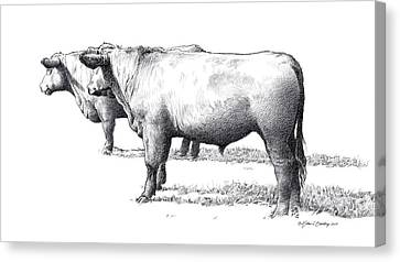 Black Angus Steers On Almshouse Road Canvas Print by William Beauchamp
