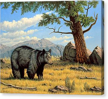 Black Bear Above Lamar Canvas Print by Paul Krapf