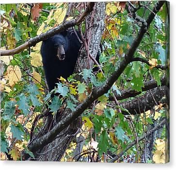 Black Bear Canvas Print by Dan Sproul