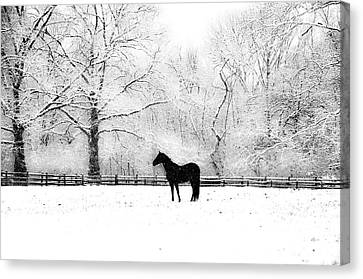 Black Beauty Canvas Print by Bill Cannon