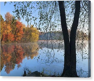 Black Birch Along Lake Bailee In Petit Canvas Print by Tim Fitzharris