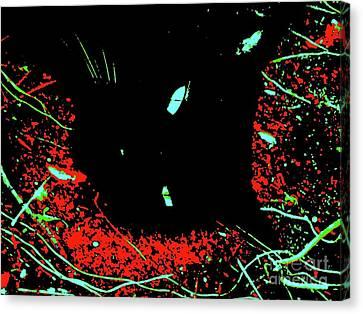 Black Cat 2348 7 Canvas Print by Nina Kaye