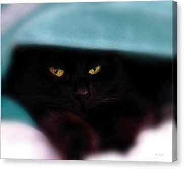 Black Cat Secrets Canvas Print by Bob Orsillo