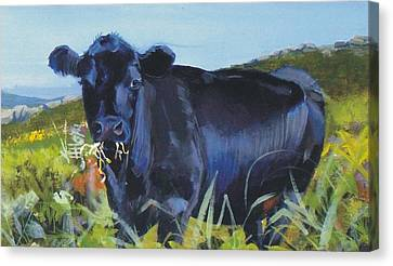Cows Dartmoor Canvas Print by Mike Jory