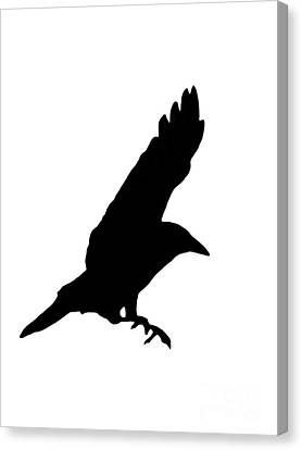 Black Crow On White Canvas Print by Linsey Williams