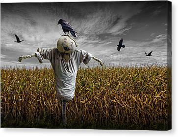 Black Crows Over A Cornfield With Scarecrow And Gray Sky Canvas Print by Randall Nyhof