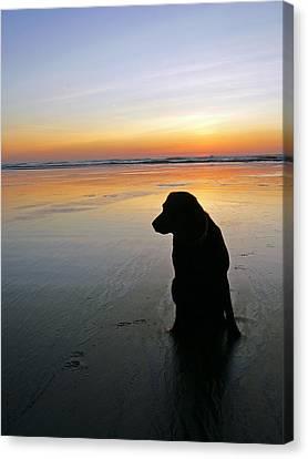 Black Dog Sundown Canvas Print by Pamela Patch