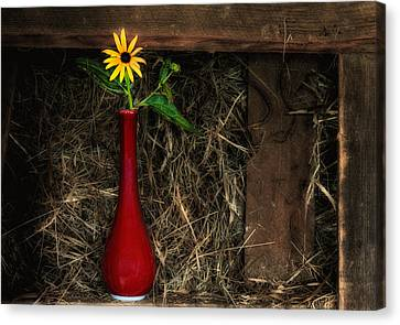 Black Eyed Susan - Still Life Canvas Print by Thomas Schoeller