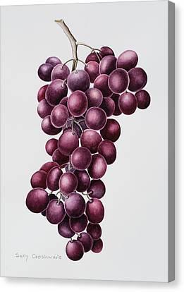 Black Grapes Canvas Print by Sally Crosthwaite