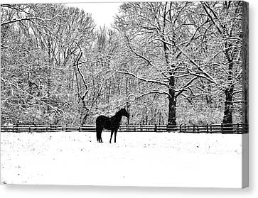 Black Horse In The Snow Canvas Print by Bill Cannon