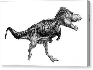 Black Ink Drawing Of Albertosaurus Canvas Print by Vladimir Nikolov