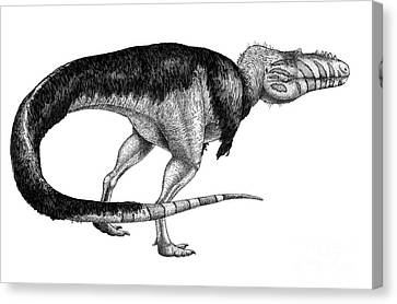 Black Ink Drawing Of Alioramus Remotus Canvas Print by Vladimir Nikolov
