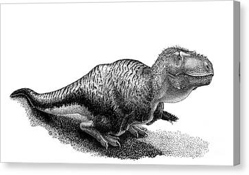 Black Ink Drawing Of Tarbosaurus Bataar Canvas Print by Vladimir Nikolov