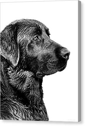 Black Labrador Retriever Dog Monochrome Canvas Print by Jennie Marie Schell