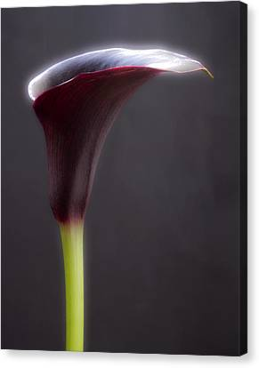 Black And White Purple Flowers Art Work Photography Canvas Print by Artecco Fine Art Photography