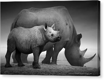Black Rhinoceros Baby And Cow Canvas Print by Johan Swanepoel