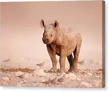 Black Rhinoceros Baby Canvas Print by Johan Swanepoel