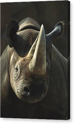 Black Rhinoceros Portrait Canvas Print by San Diego Zoo