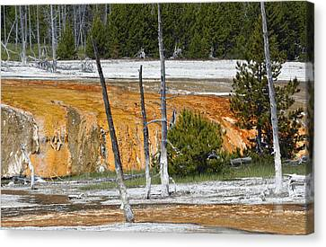 Black Sand Basin Therma Runoff Yellowstone Canvas Print by Bruce Gourley