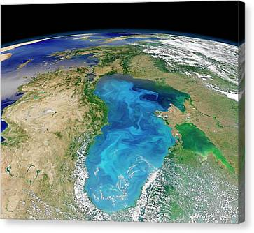 Black Sea Phytoplankton Bloom Canvas Print by Nasa/norman Kuring