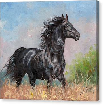 Black Stallion Canvas Print by David Stribbling