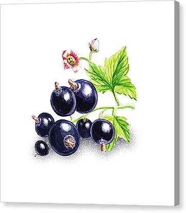 Blackcurrant Still Life Canvas Print by Irina Sztukowski