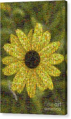 Blackeyed Suzy Mosaic Canvas Print by Darleen Stry