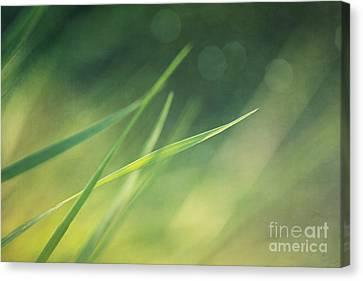 Blades Of Grass Bathing In The Sun Canvas Print by Priska Wettstein