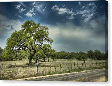 Blanco Tree Canvas Print by Wayne Kondoff