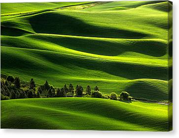 Blanketed In Green Canvas Print by Todd Klassy