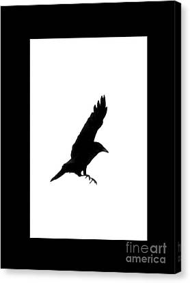 Black Crow Canvas Print by Linsey Williams