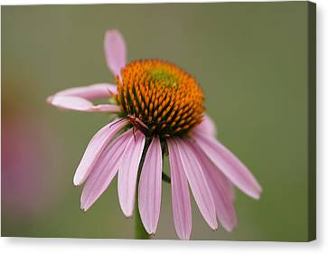 Blending In Canvas Print by Ernie Echols