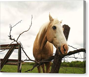 Blond And Blue Eyes Canvas Print by Ransom Williams