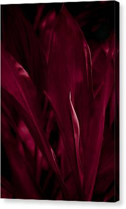 Blood Red Canvas Print by Kevin Barske