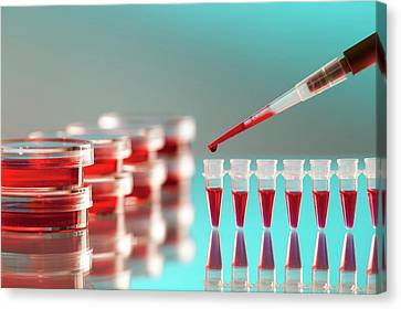 Blood Testing Canvas Print by Wladimir Bulgar