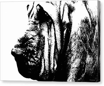 Bloodhound - It's Black And White - By Sharon Cummings Canvas Print by Sharon Cummings