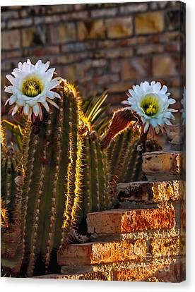 Blooming Cactus Canvas Print by Robert Bales