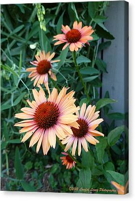Blooming Coneheads Canvas Print by Lingfai Leung