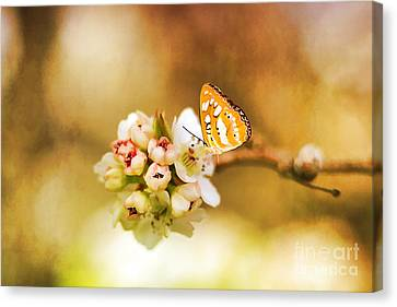 Blooms And Butterflies Canvas Print by Darren Fisher