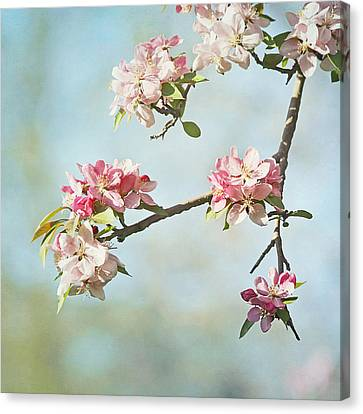 Blossom Branch Canvas Print by Kim Hojnacki