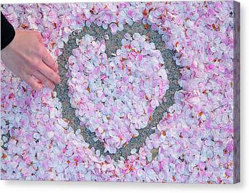 Blossoms Of Love - Cherry Blossoms 2013 - 071 Canvas Print by Metro DC Photography