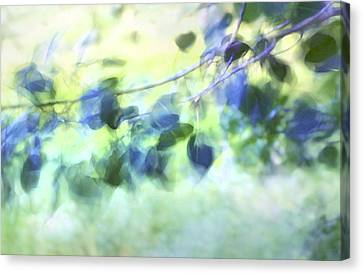 Blowin' In The Wind Canvas Print by Theresa Tahara