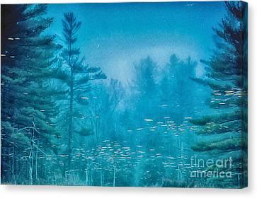 Blu Canvas Print by Sue OConnor