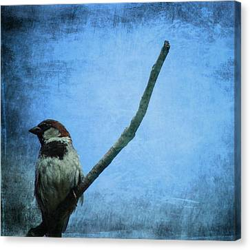 Sparrow On Blue Canvas Print by Dan Sproul