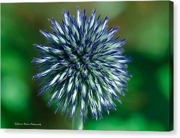 Blue Burst Canvas Print by Sheen Watkins