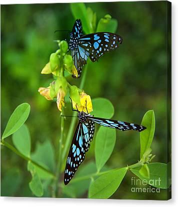 Blue Butterflies In The Green Garden Canvas Print by Regina Koch