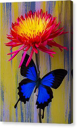 Blue Butterfly On Fire Mum Canvas Print by Garry Gay