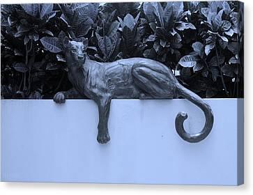 Blue Cat Canvas Print by Rob Hans